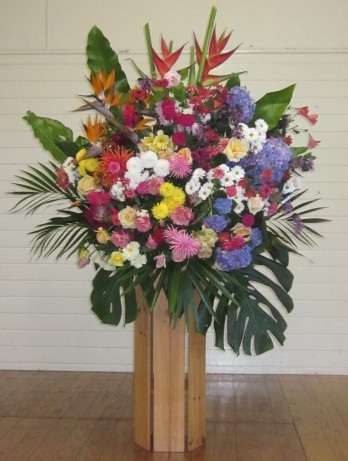 The beautiful flower display