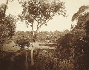 Harold Cazneaux, Distant view of Margaret Preston's house at Berowra, 1936