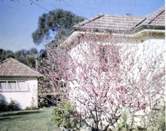 Shirleys House